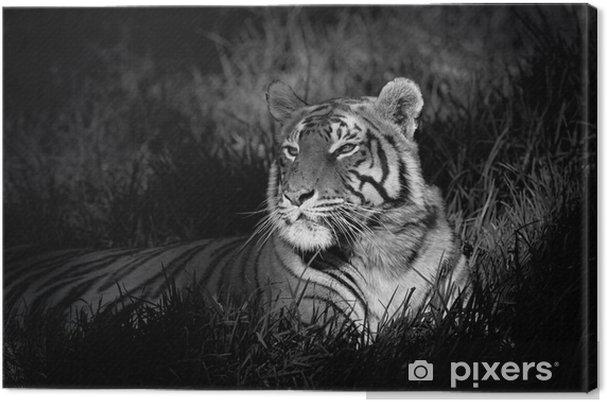Quadro su Tela Immagine in bianco e nero di una tigre del Bengala -