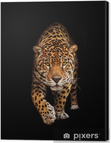 Quadro su Tela Jaguar nel buio - vista frontale, isolata -