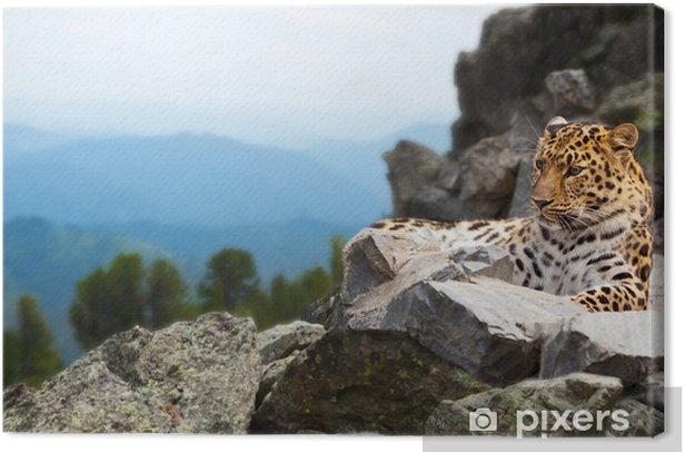 Quadro su Tela Leopardo sulla roccia - Mammiferi