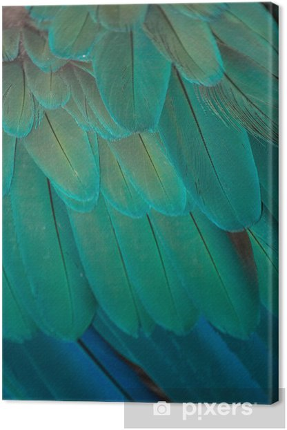 Quadro su Tela Macaw - Uccelli