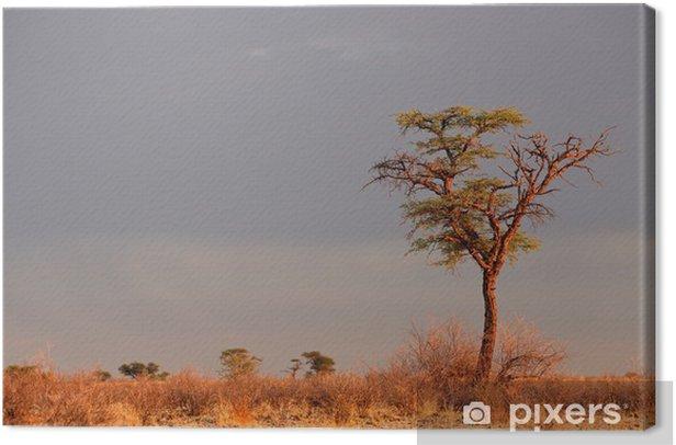 Quadro su Tela Paesaggio con un albero di acacia camelthorn (Acacia erioloba), deserto del Kalahari, Sud Africa - Alberi