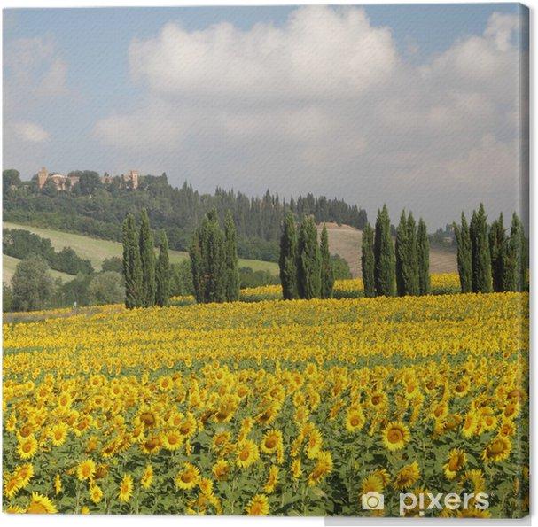 Quadro su Tela Paesaggio toscano con girasoli e cipressi, Italia ...