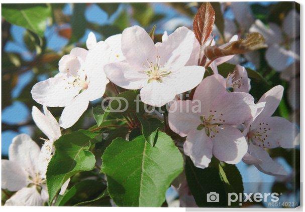 Fiori Bianchi Primavera.Quadro Su Tela Primavera Fiori Bianchi Fiore Pixers Viviamo