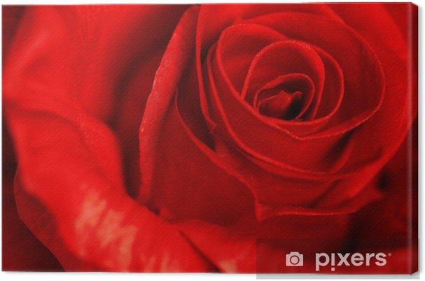 Quadro Su Tela Primo Piano Di Una Rosa Rossa Pixers Viviamo Per