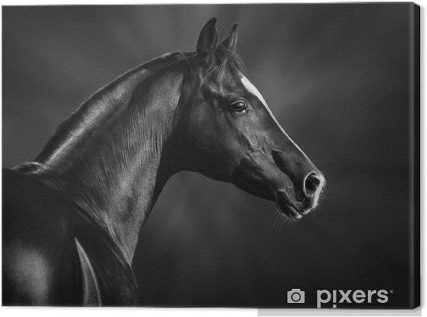 Quadro su Tela Ritratto in bianco e nero di arabo stallone - Temi