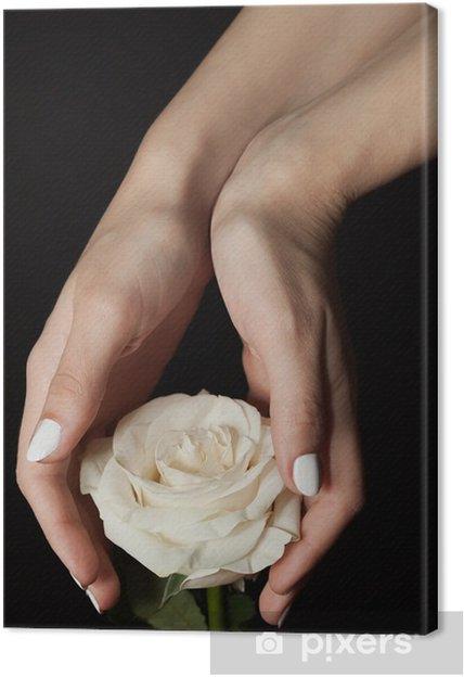 Quadro Su Tela Rosa Bianca E Le Mani Su Sfondo Nero Pixers