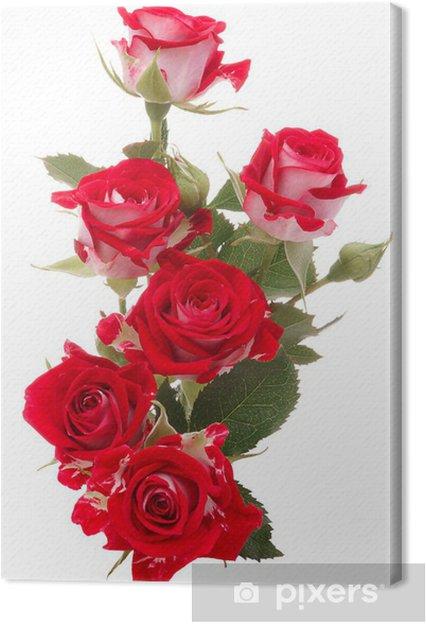 Quadro Su Tela Rosa Rossa Bouquet Di Fiori Isolato Su Sfondo Bianco