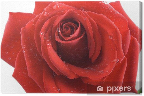 Quadro su tela rose passion u2022 pixers® viviamo per il cambiamento