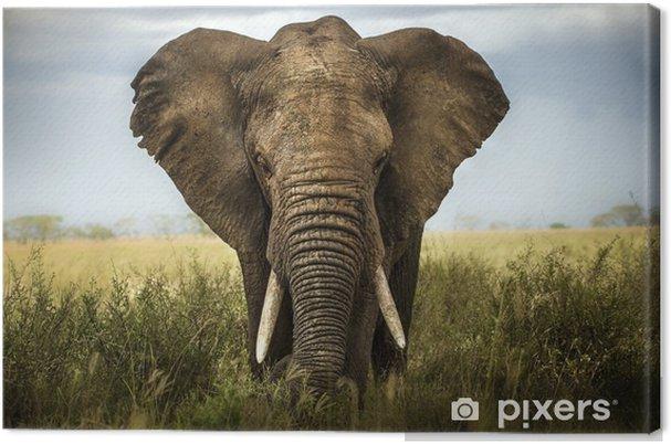 Quadro su Tela Sfondo di elefante - Elefanti
