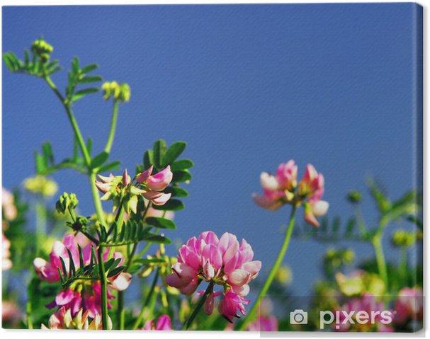Quadro Su Tela Sfondo Prato Estate Con Fiori Rosa Fioritura Corona