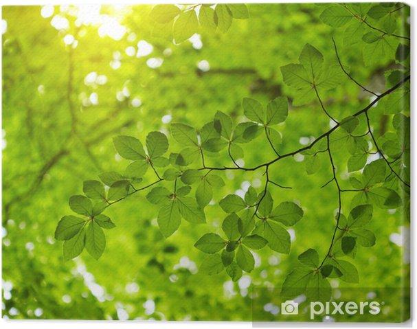 Quadro Su Tela Sfondo Verde Foglie Pixers Viviamo Per Il