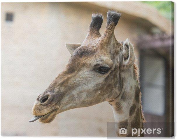 Quadro su Tela Testa Giraffee - Mammiferi