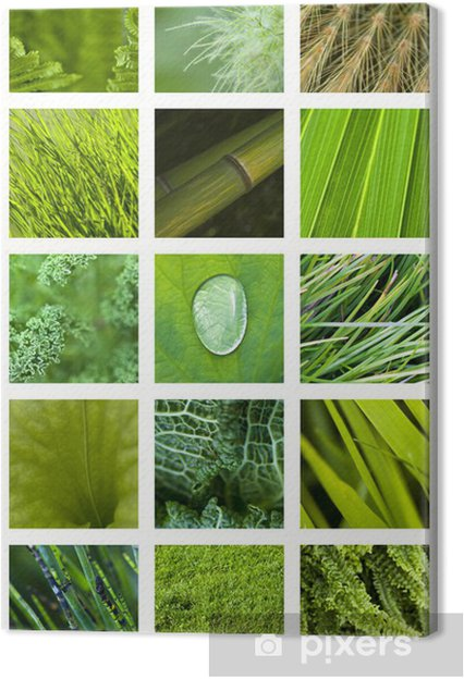 Quadro Su Tela Texture Materiale Sfondo Verde Natura Giardino