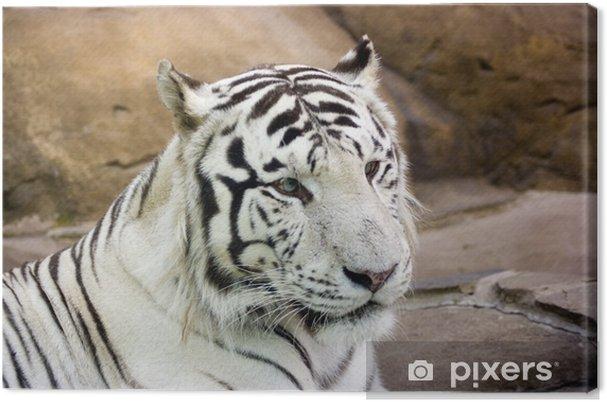 Quadro su tela tigre bianca con gli occhi verdi u2022 pixers® viviamo