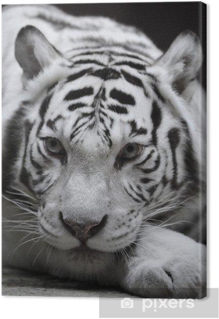 Quadro su tela tigre bianca u2022 pixers® viviamo per il cambiamento