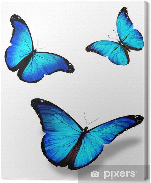 Quadro Su Tela Tre Blu Farfalla Morfo Isolato Su Sfondo Bianco