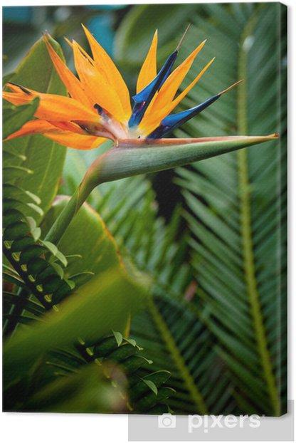 Fiori Uccelli Del Paradiso.Quadro Su Tela Uccello Del Paradiso Fiore Pixers Viviamo Per