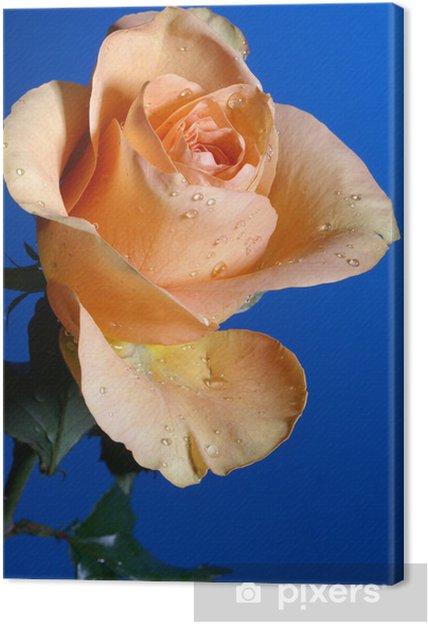 Quadro Su Tela Una Rosa Gialla Su Sfondo Blu Profondo Pixers