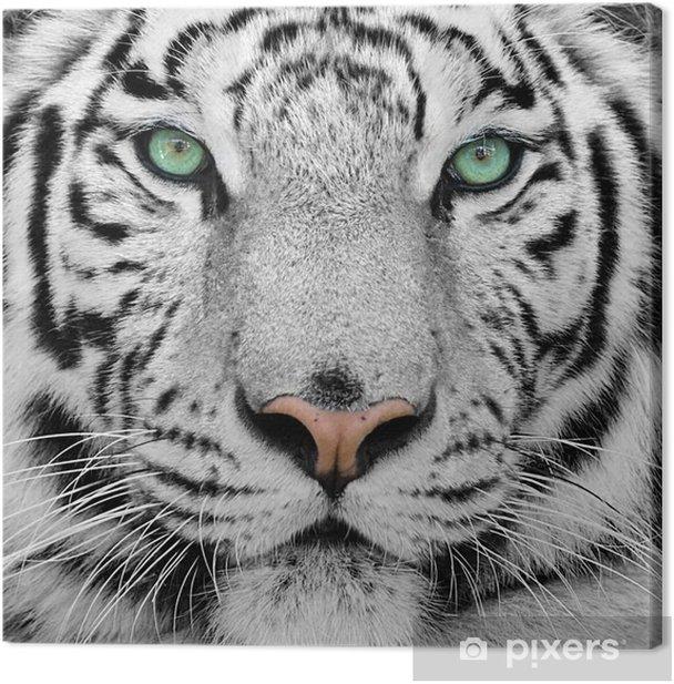 Quadro su Tela White tiger -