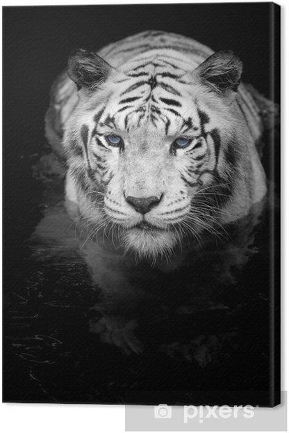 Quadro su Tela White tiger - Stili