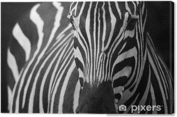 Quadro su Tela Zebra 2 - Temi