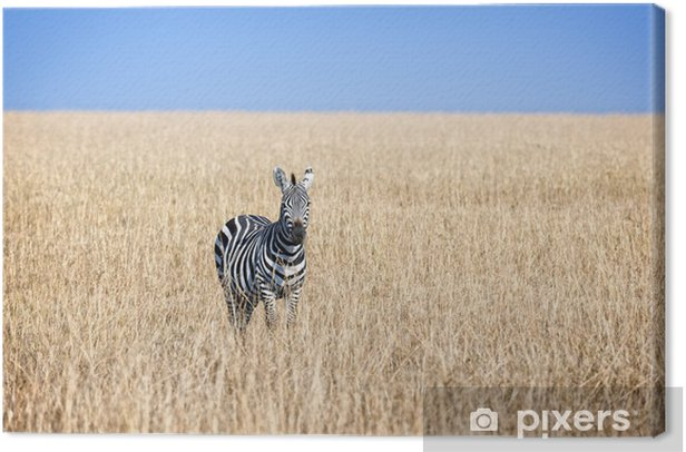 Quadro su Tela Zebrato - Africa