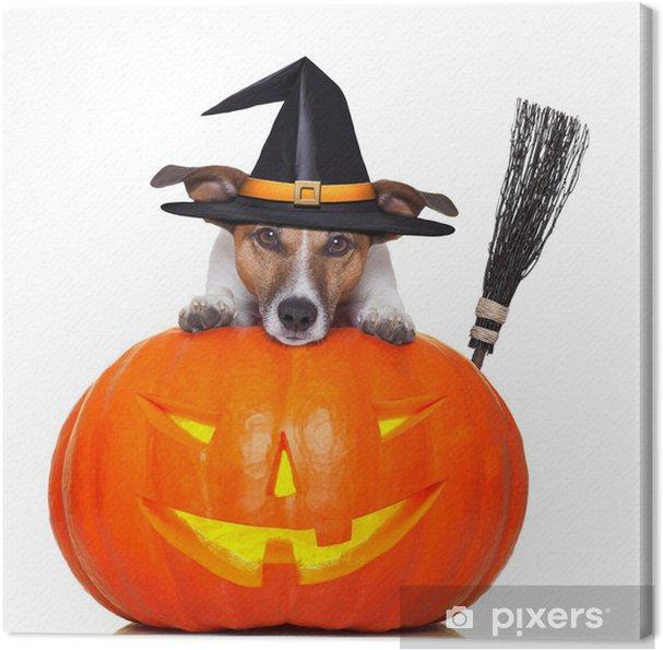 Quadro su Tela Zucca di Halloween cane strega • Pixers® - Viviamo ... db2f0a6527b3