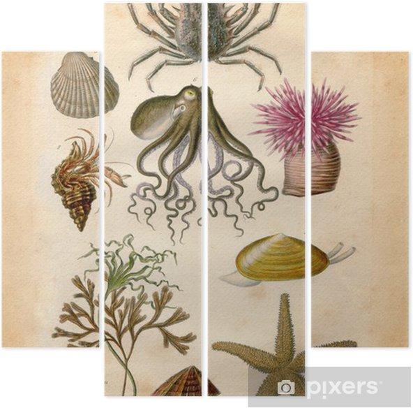 Quadríptico Histoire naturel : Fond Marin - Vida aquática e marinha