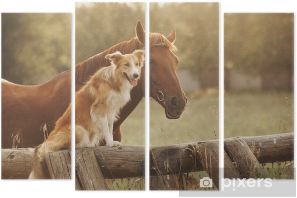 Red border collie dog and horse Quadriptych - Mammals