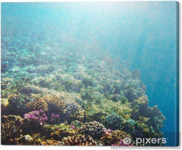 Quadro em Tela Coral reef - Recife de corais