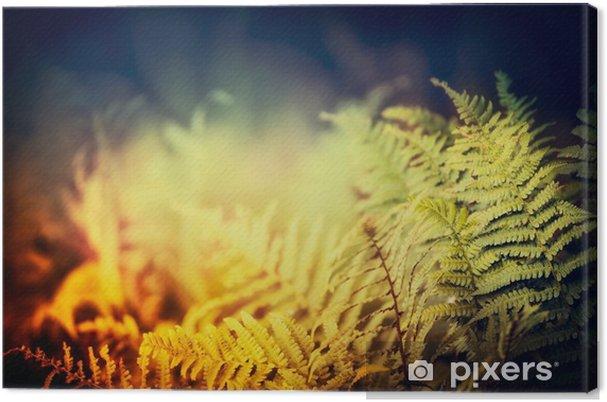 Quadro em Tela Folhas de samambaia na natureza fundo escuro, ao ar livre - Paisagens