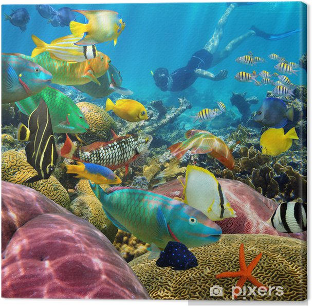 Quadro em Tela Man underwater coral reef and tropical fish - Recife de corais