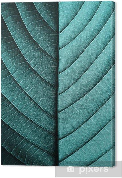 Quadro em Tela Padrões de folha azul perfeita - closeup - Plantas e Flores