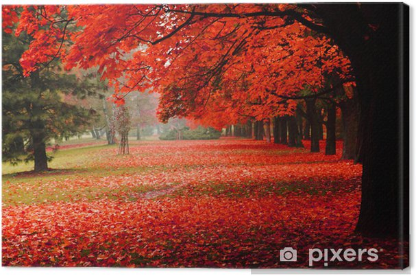 Quadro em Tela red autumn in the park - Destino