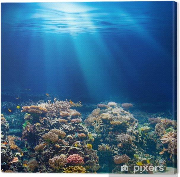 Quadro em Tela Sea or ocean underwater coral reef snorkeling or diving backgrou - Recife de corais