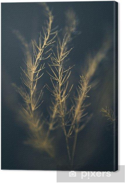 Quadro em Tela Sunlit da grama - Plantas e Flores