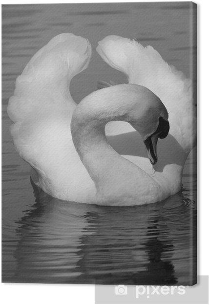 Quadro em Tela Swimming swan - Pássaros