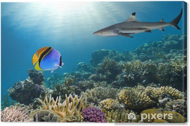 Quadro em Tela Underwater image of coral reef with shark - Tubarões