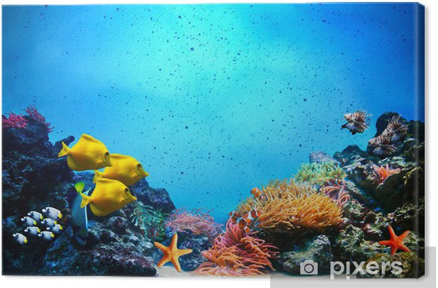 Quadro em Tela Underwater scene. Coral reef, fish groups in clear ocean water - Recife de corais