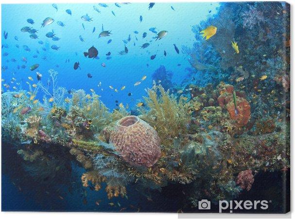 Quadro em Tela Underwater wreck of the Liberty - Recife de corais