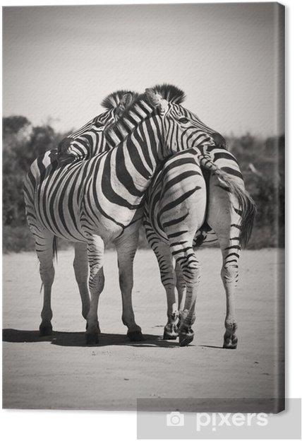 Quadro em Tela Zebra love - Zebras
