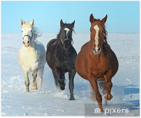 Selbstklebendes Poster Pferd - Themen
