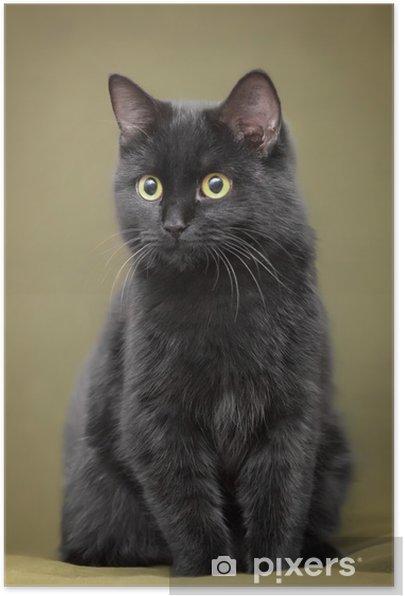 Selbstklebendes Poster Schone Schwarze Katze Mit Gelben Augen Auf