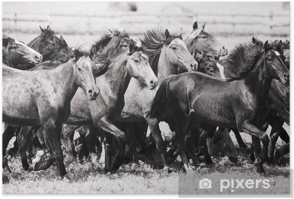 A herd of young horses Self-Adhesive Poster - Mammals