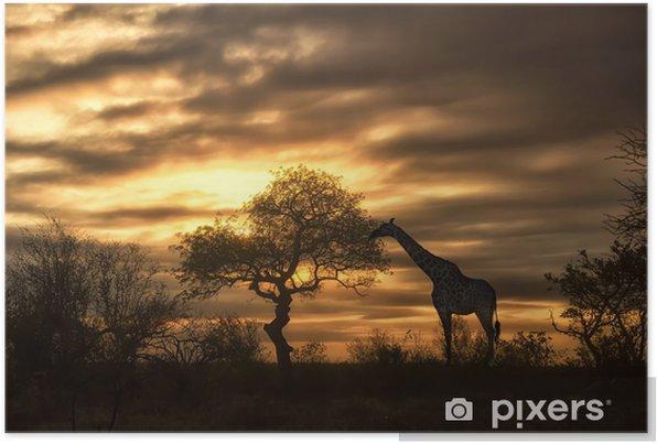 african giraffe walking in sunset Self-Adhesive Poster - Themes