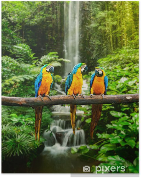Blue-and-Yellow Macaw Self-Adhesive Poster - Themes