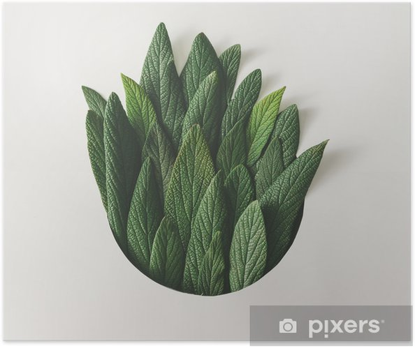Creative minimal arrangement of green leaves. Nature concept. Flat lay. Self-Adhesive Poster - Plants and Flowers