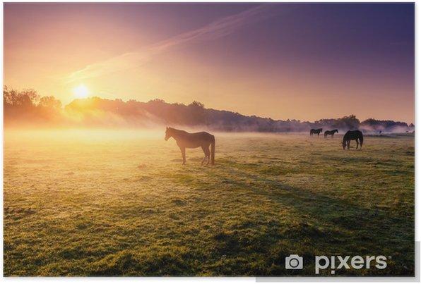 horses grazing on pasture Self-Adhesive Poster - Animals