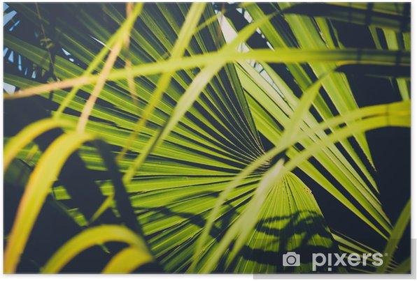 palm leaf closeup, inside tropical garden - plant background Self-Adhesive Poster - Plants and Flowers