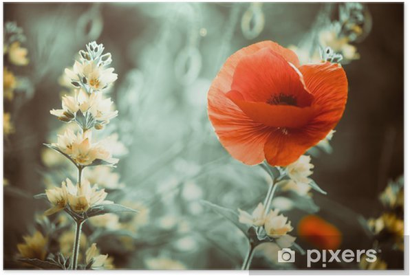 red poppy flower at garden sunset Self-Adhesive Poster - Flowers and plants